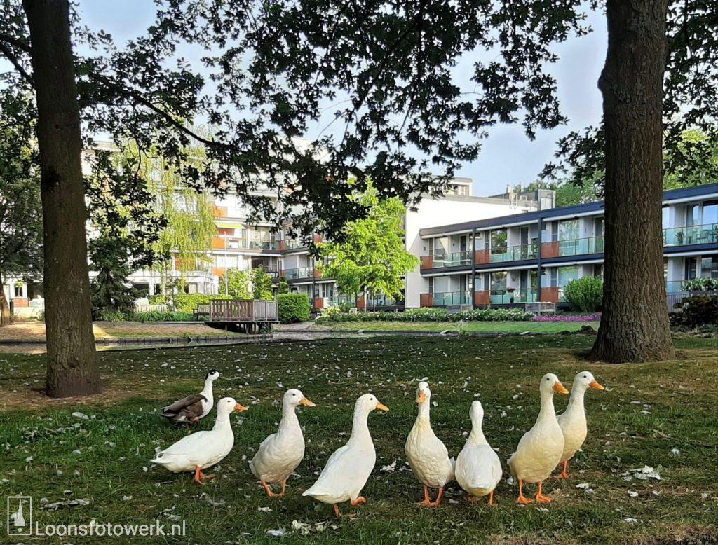 Residentie Molenwijck