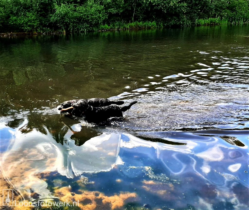 De Ijsbaan hondenparadijs
