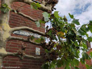 Willibrordusstraat