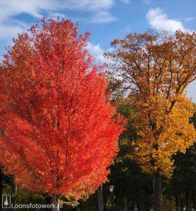 20201029 Herfst in Loon, deel 5 - Castellanie