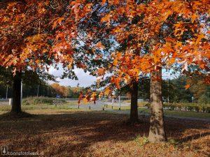 Herfst in Loon, deel 4 – Busstation, fietstunnel en Kraanven