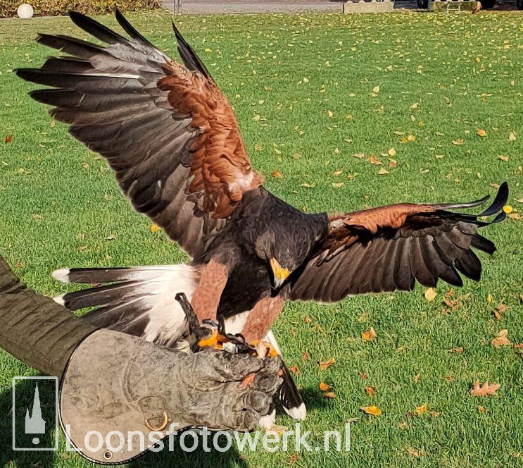 Vogelvlucht, deel 1 – Woestijnbuizerds Karel en Rocky