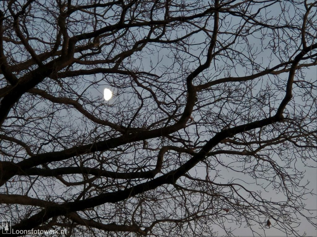 Zie de maan schijnt door de bomen…