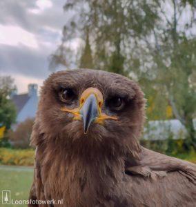 Vogel Vlucht, deel 3 - Steppearend Pablo