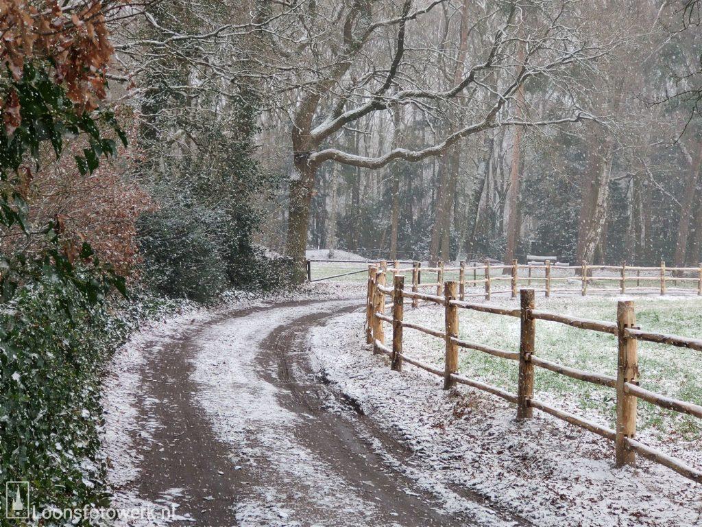 Venloon in de sneeuw