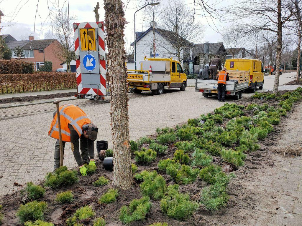 Groenwerkzaamheden Van Hornestraat