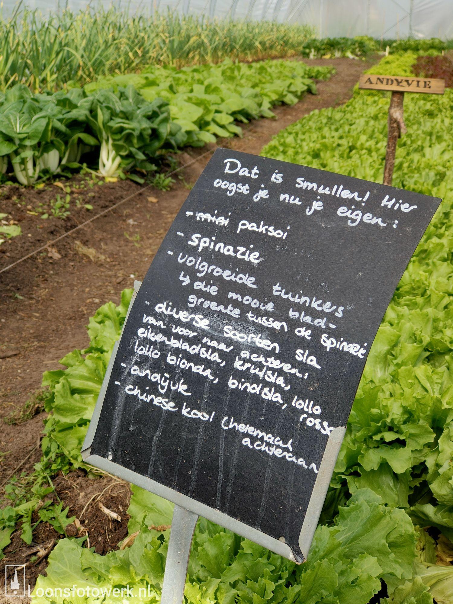 Sprankenhof, biologische groente- en fruitwinkel 9