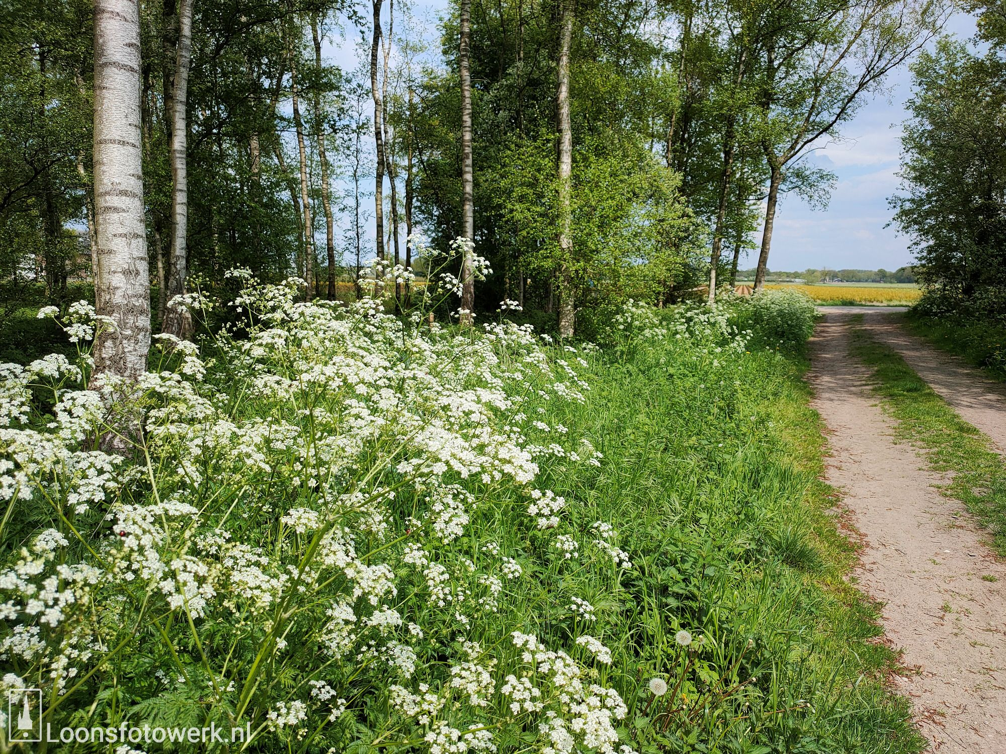 Voorjaar aan het Moleneind 3