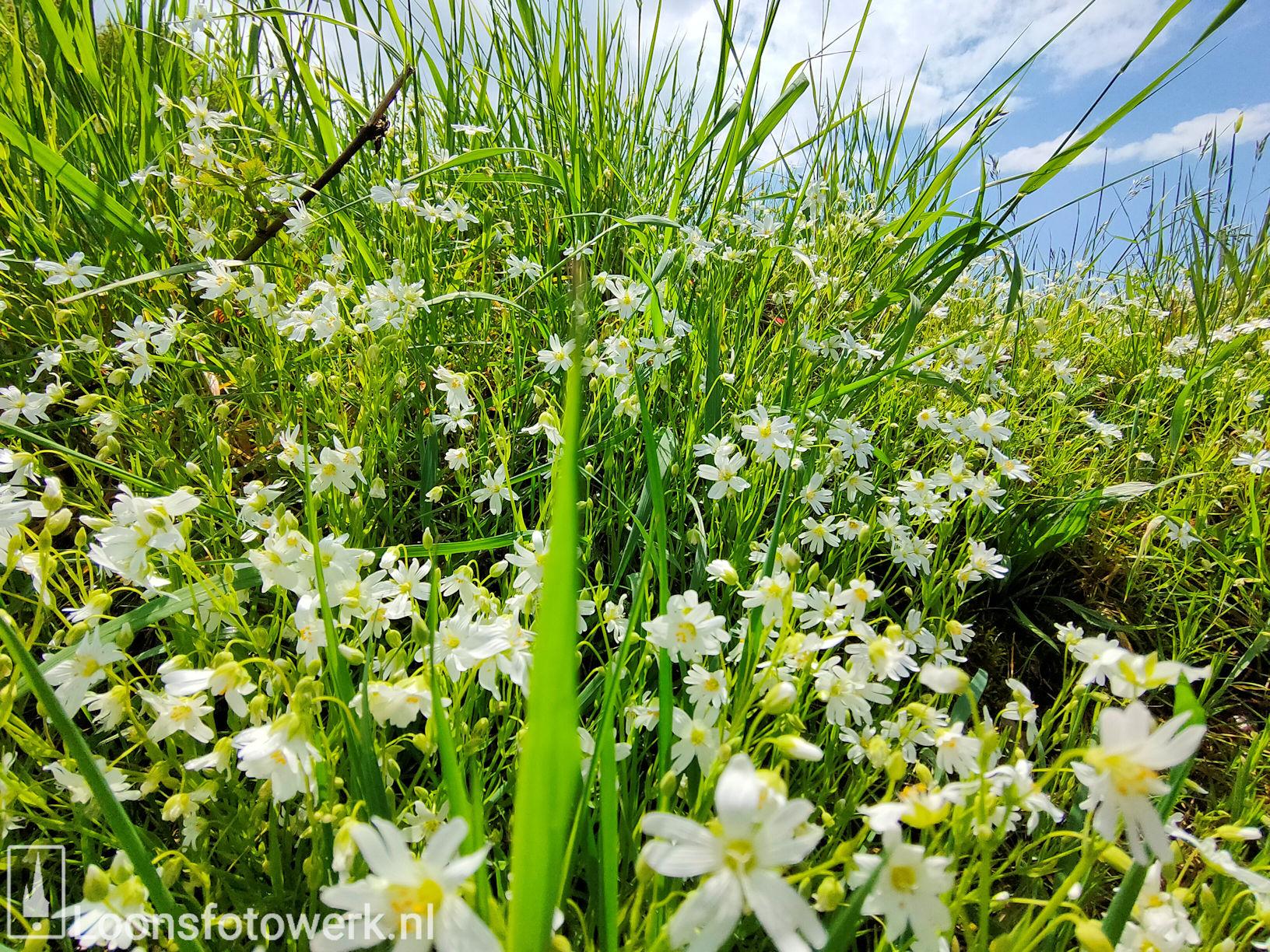 Voorjaar aan het Moleneind 15
