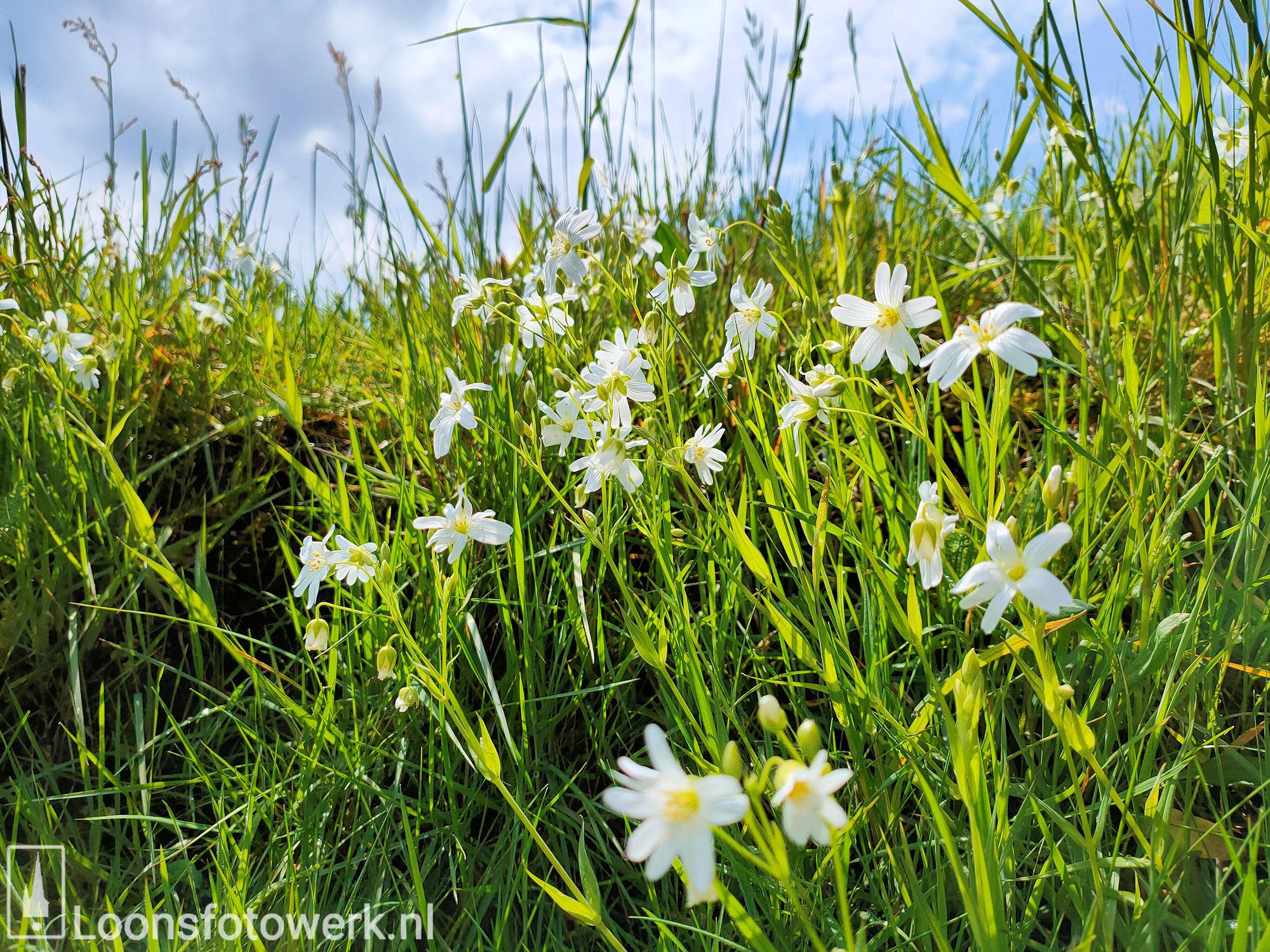 Voorjaar aan het Moleneind 16