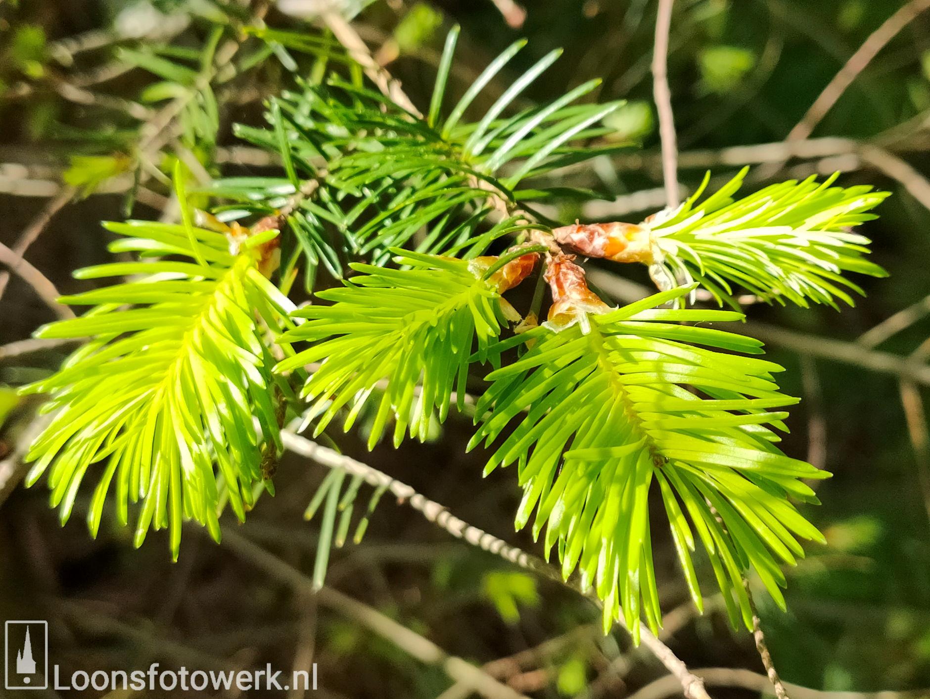 Fris groen in bosgebied 2
