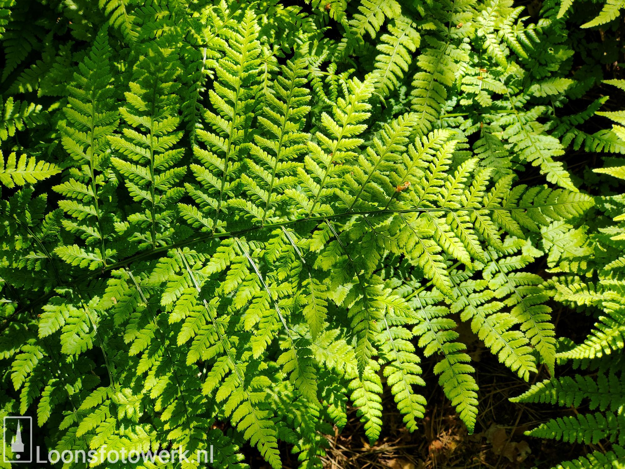 Fris groen in bosgebied 3