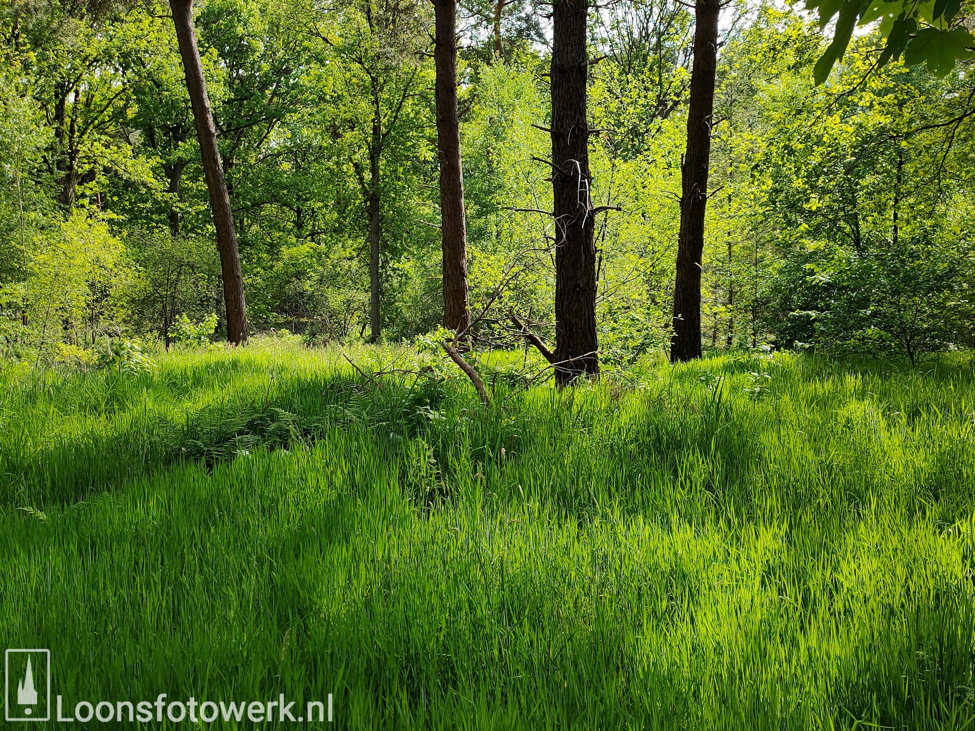 Fris groen bosgebied