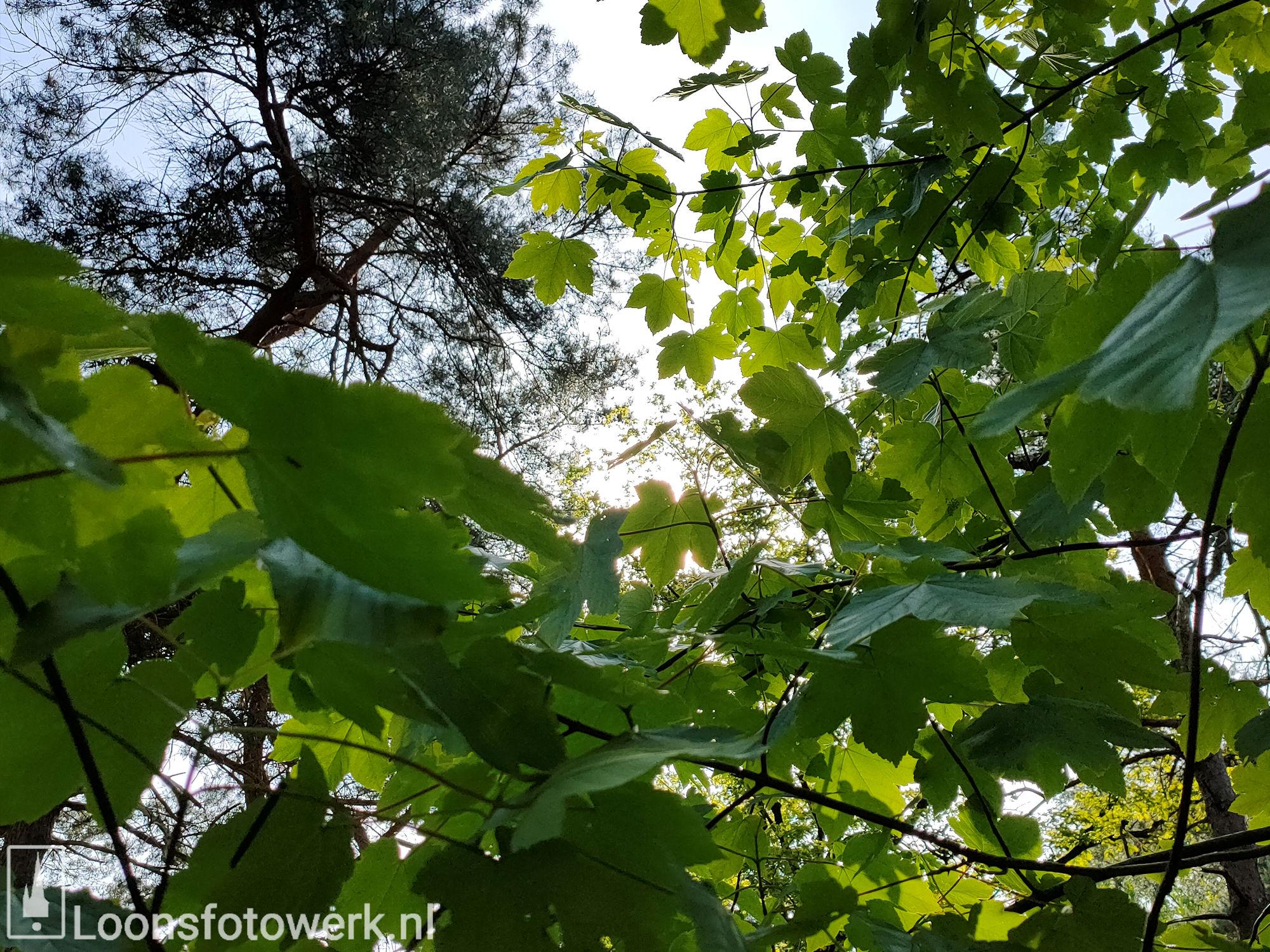 Fris groen in bosgebied 6
