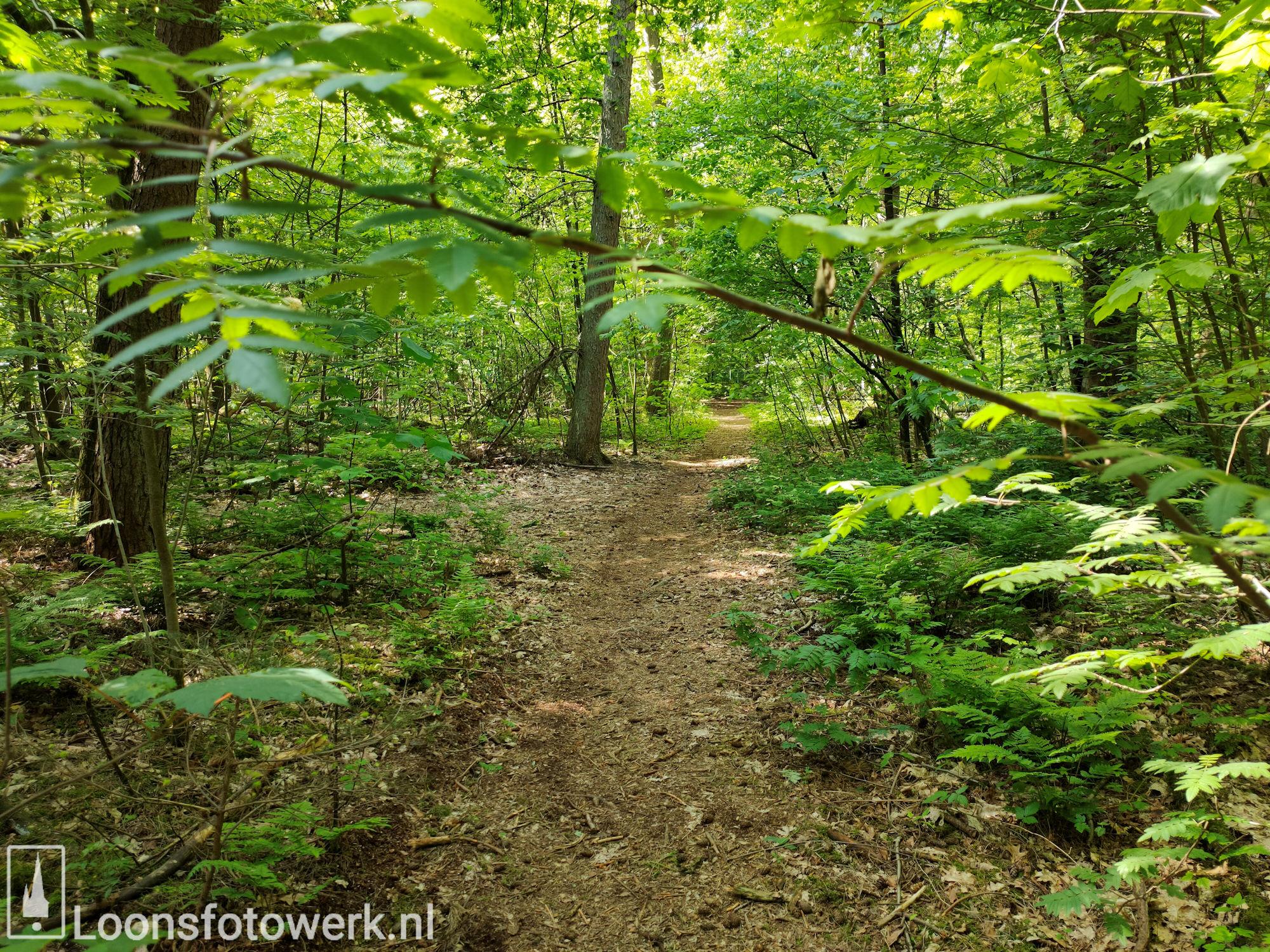 Fris groen in bosgebied 11