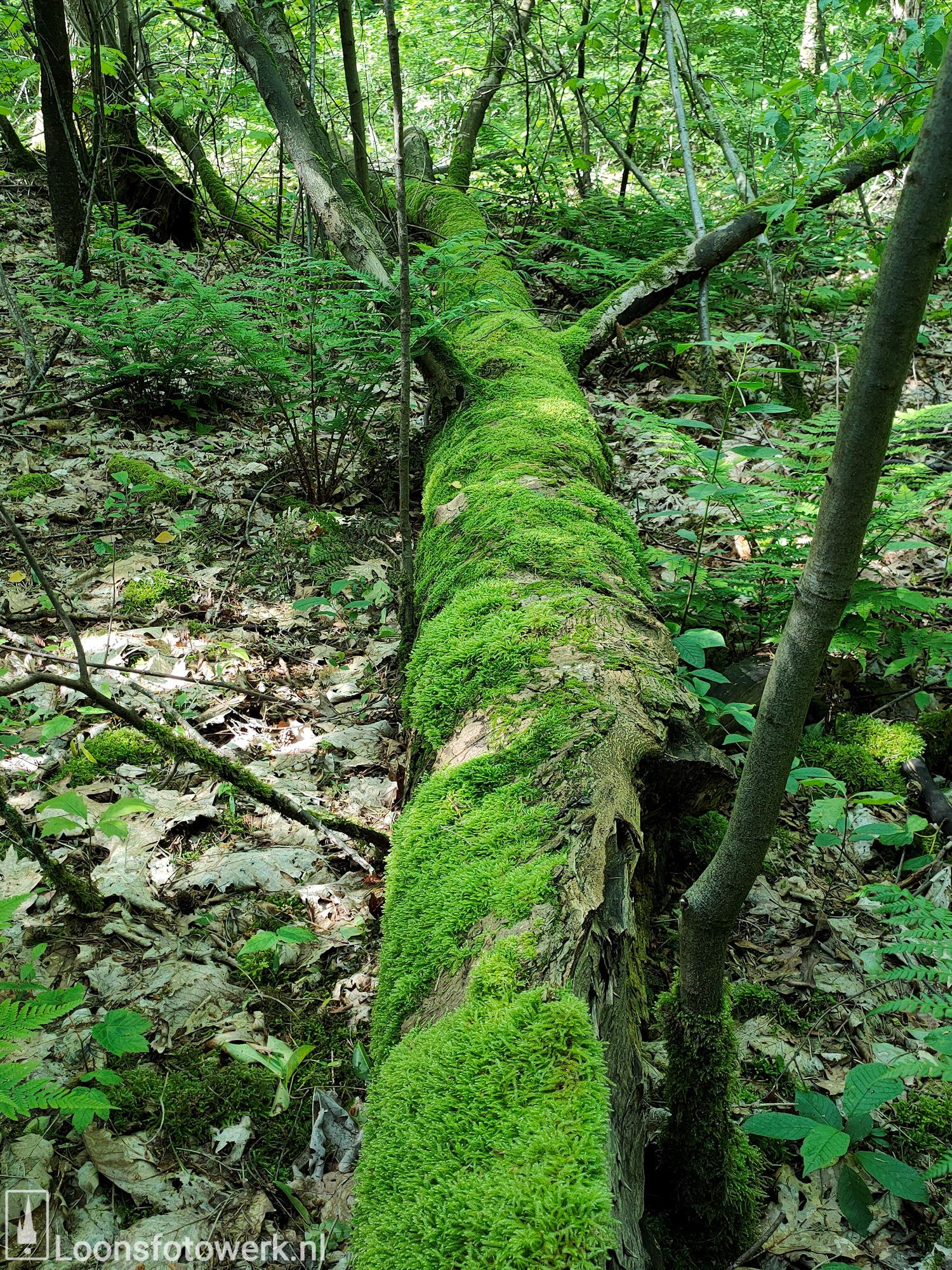 Fris groen in bosgebied 13