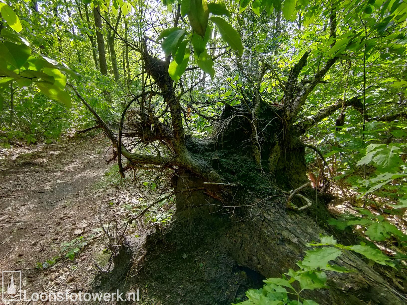 Fris groen in bosgebied 16