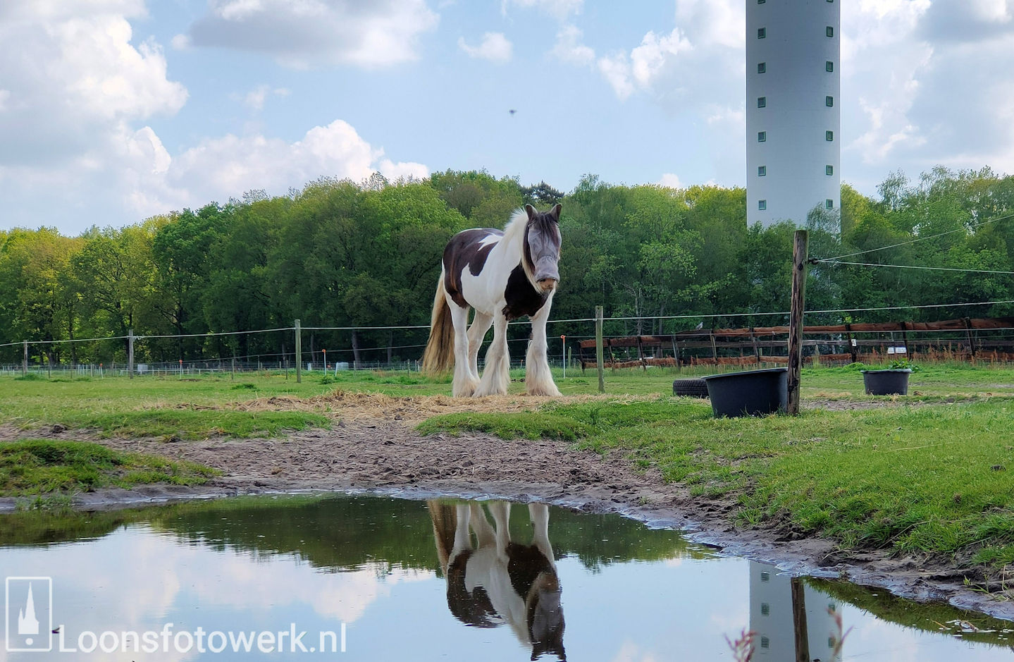 De Kommer boerderijcamping en paardenpension 14