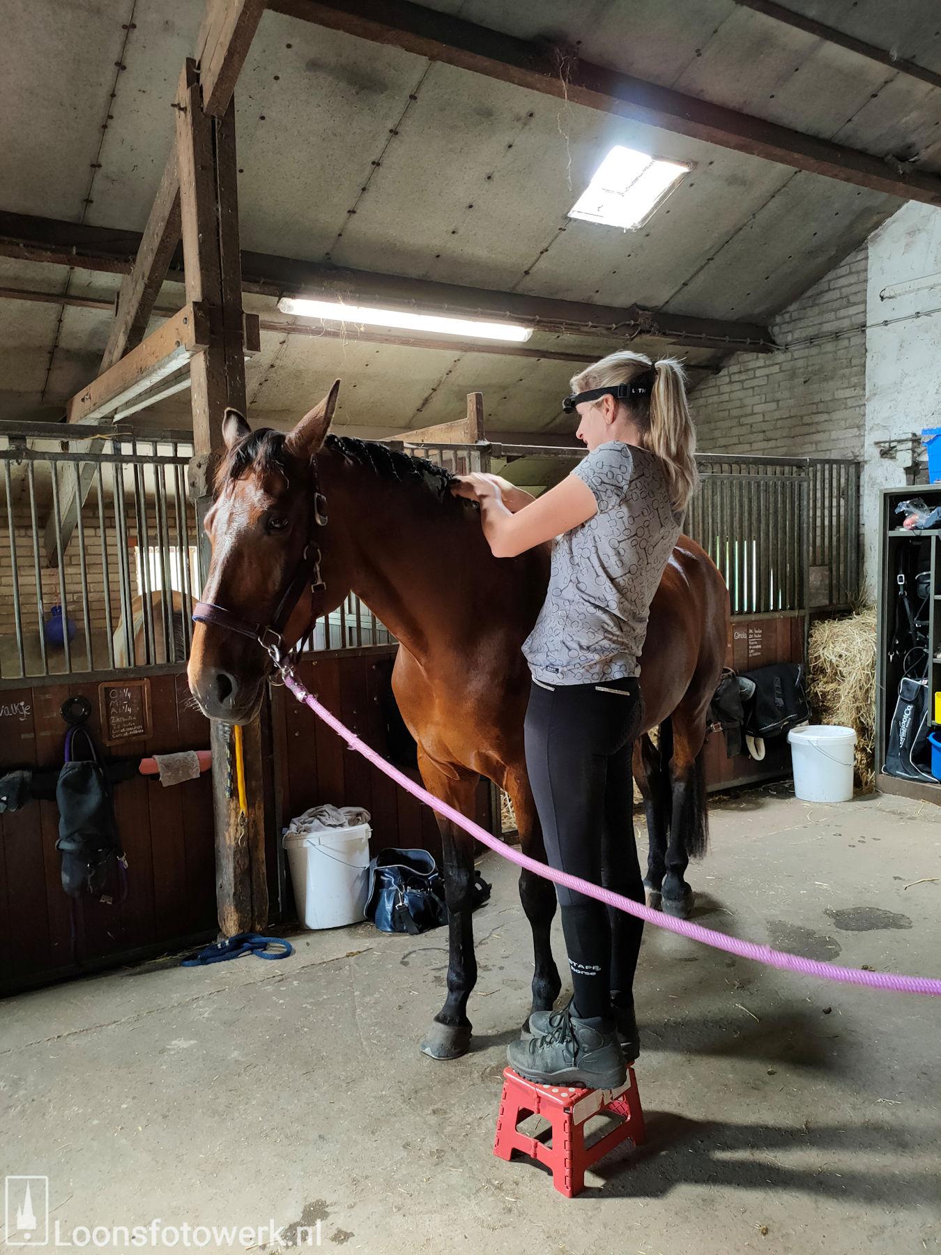 De Kommer boerderijcamping en paardenpension 34