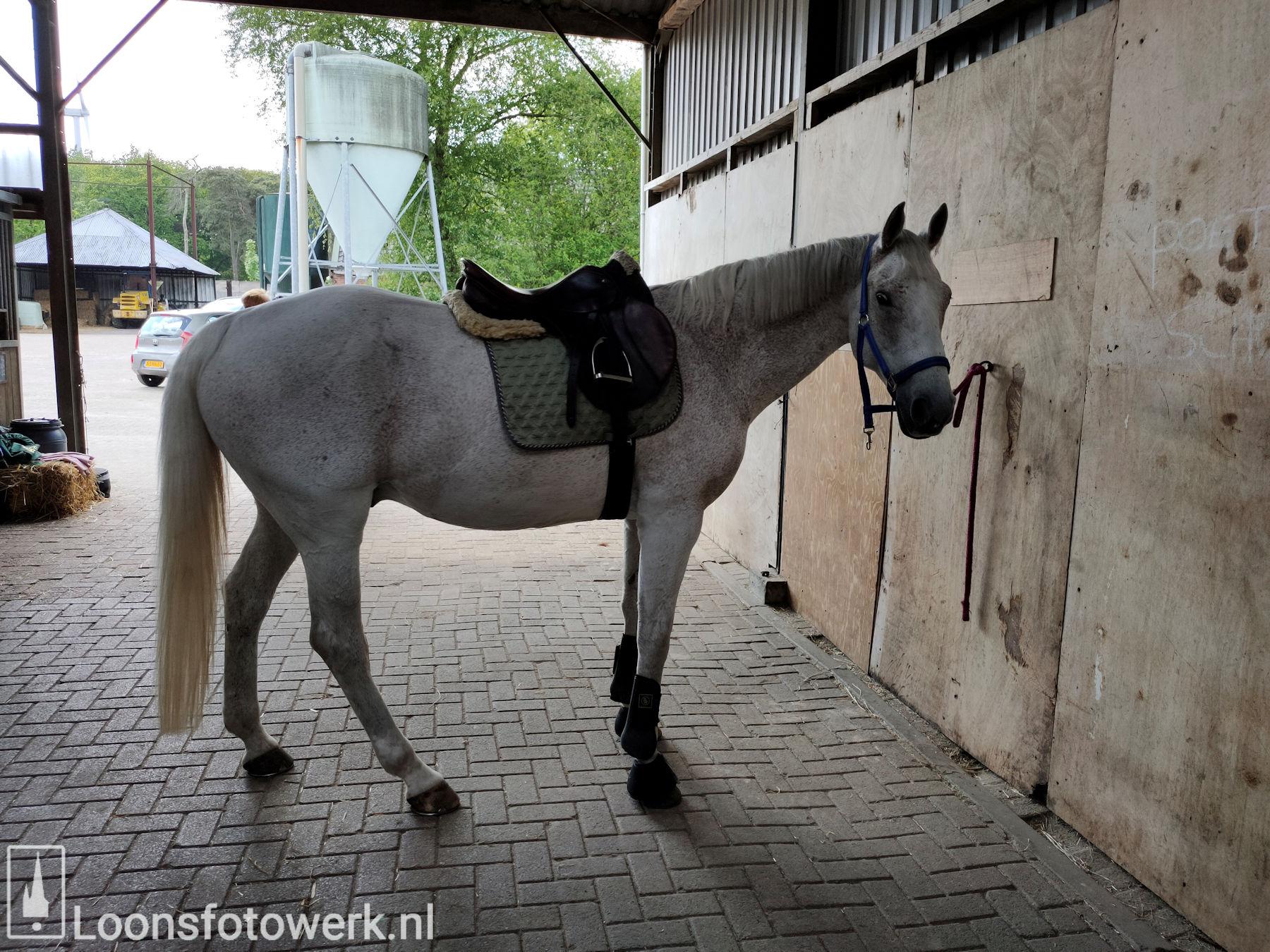 De Kommer boerderijcamping en paardenpension 36