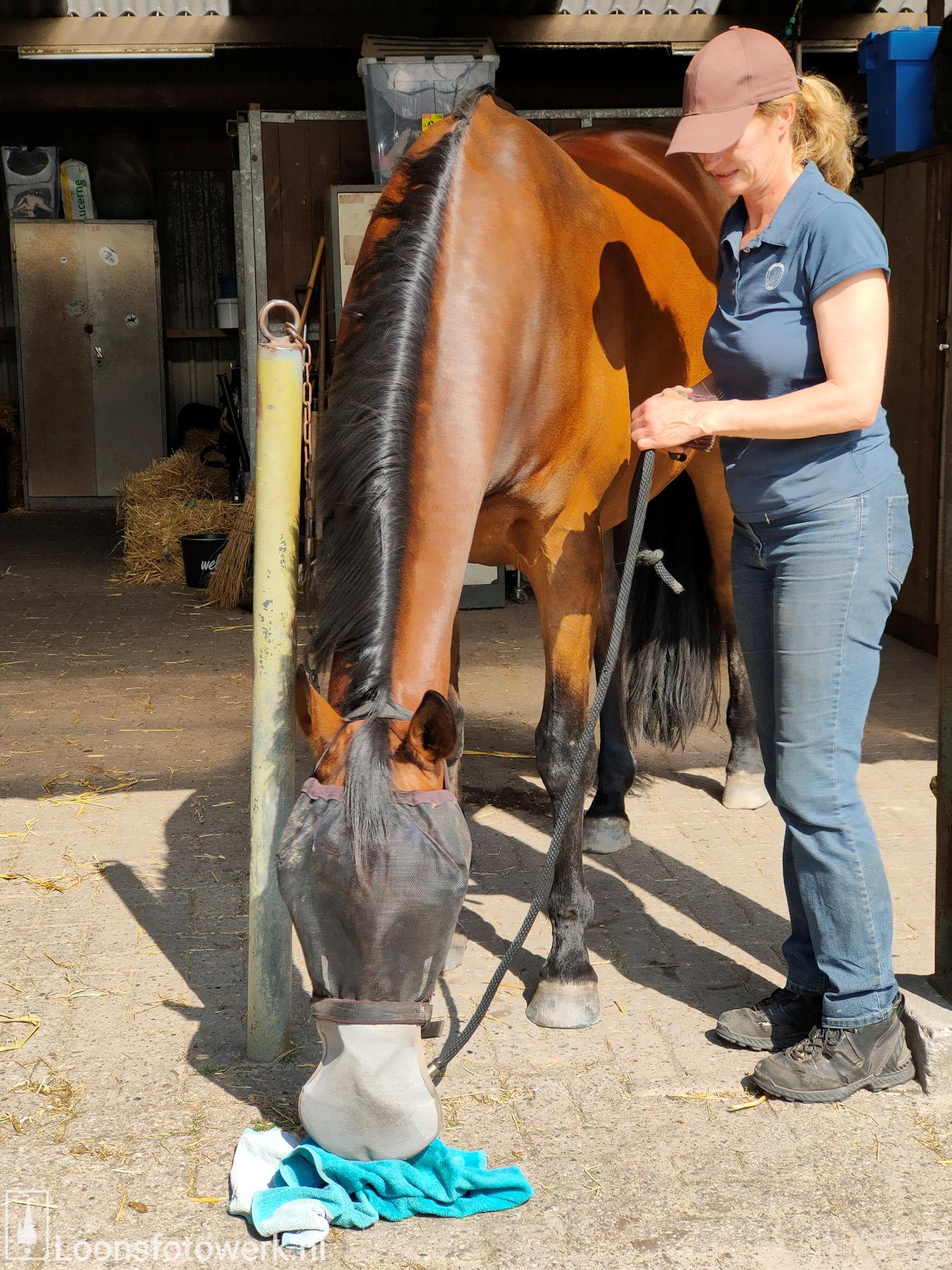De Kommer boerderijcamping en paardenpension 53