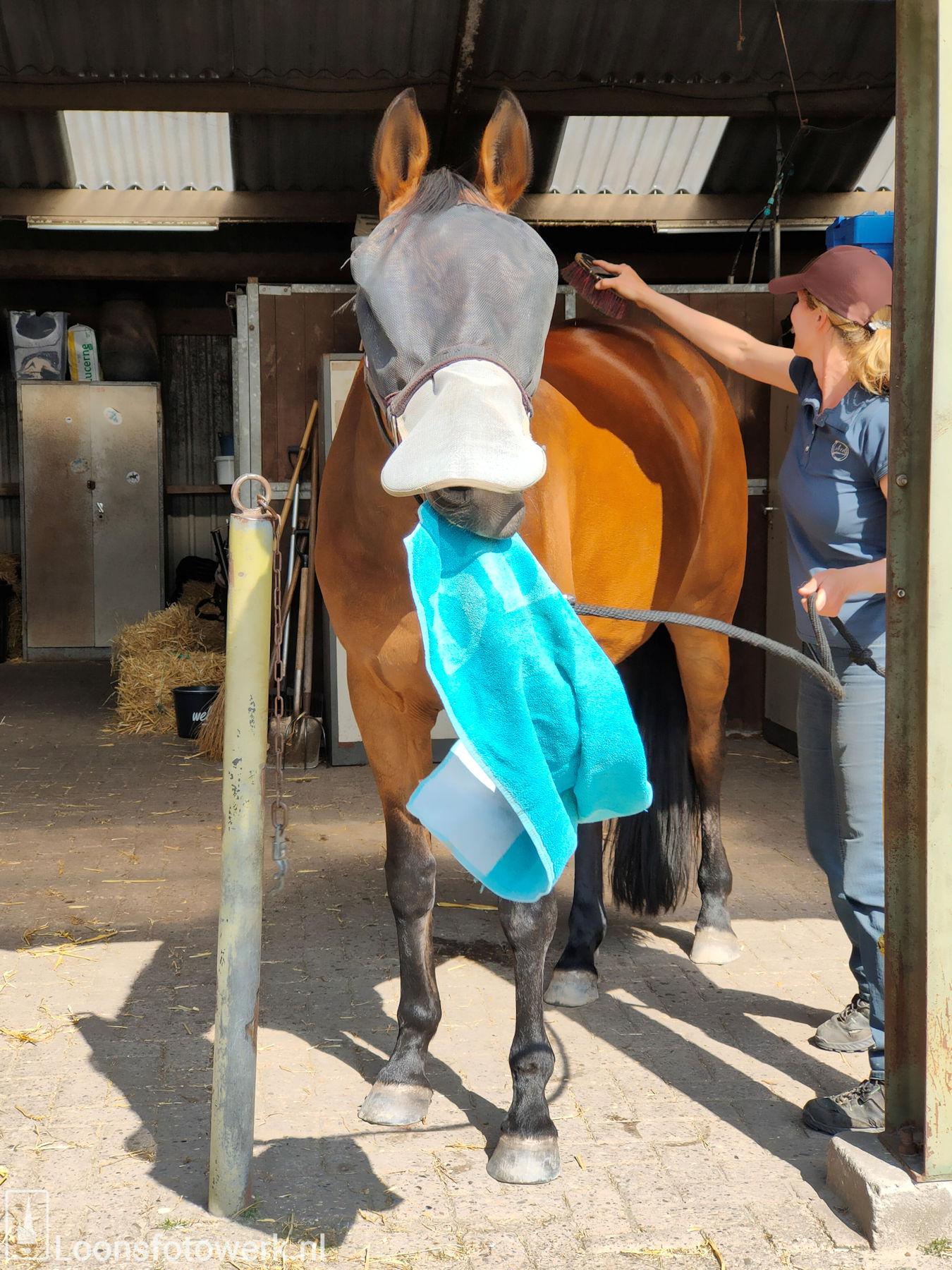 De Kommer boerderijcamping en paardenpension 57