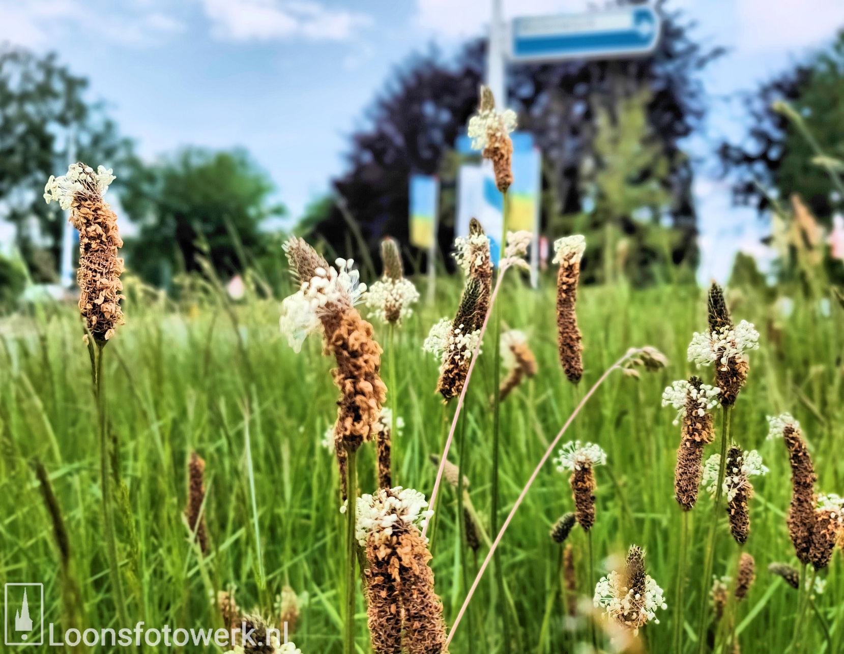 Rotonde Kasteellaan – Kasteelhoevenweg, juni 3