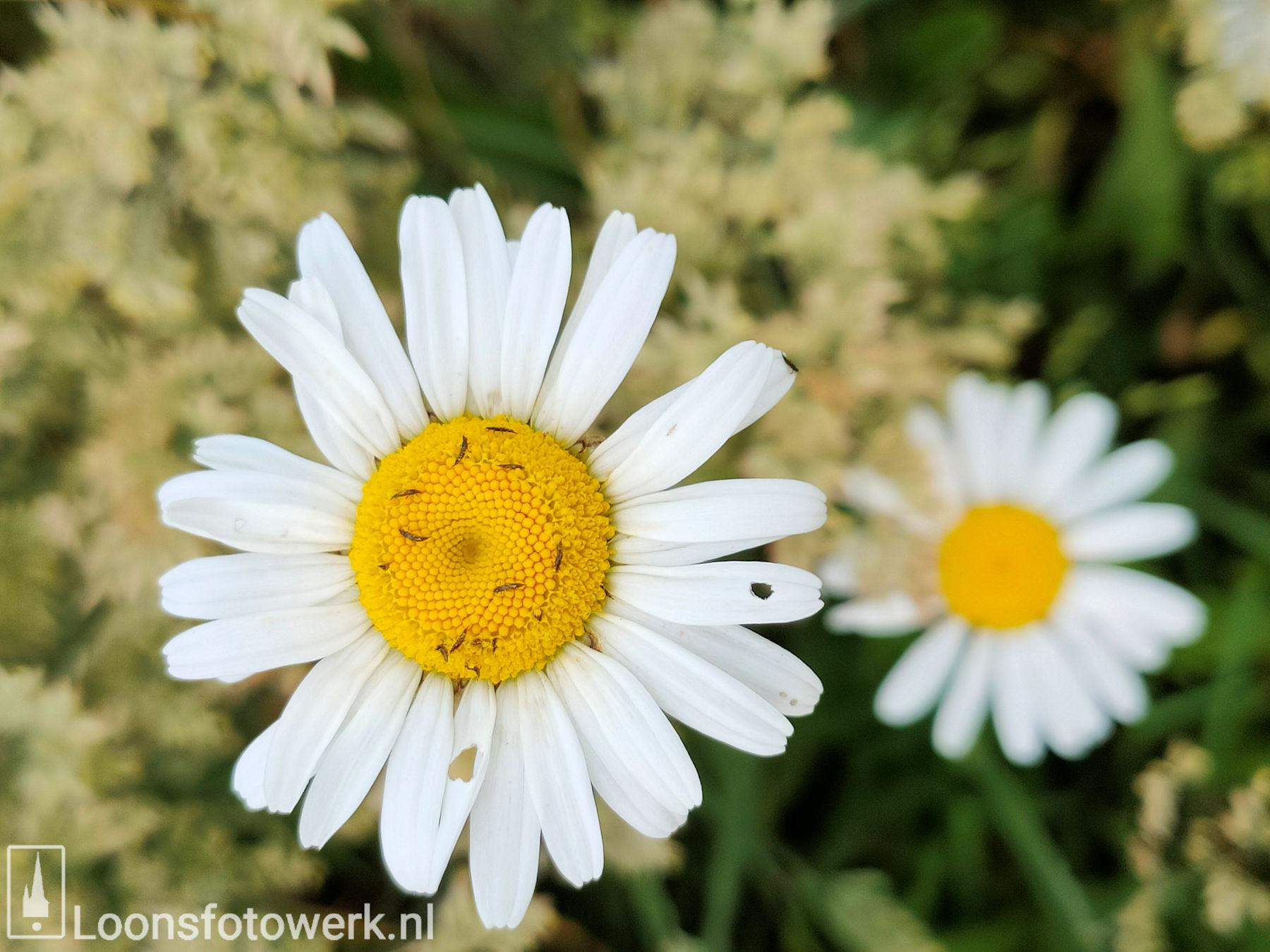 Bloemenweide Moleneind 4