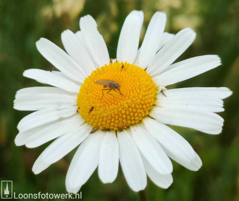 Bloemenweide Moleneind 5