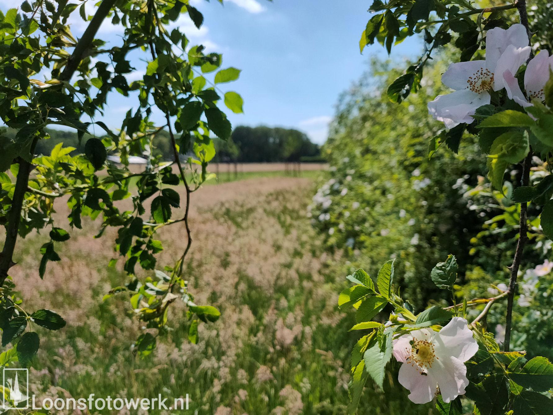 Bloemenweide Moleneind 10
