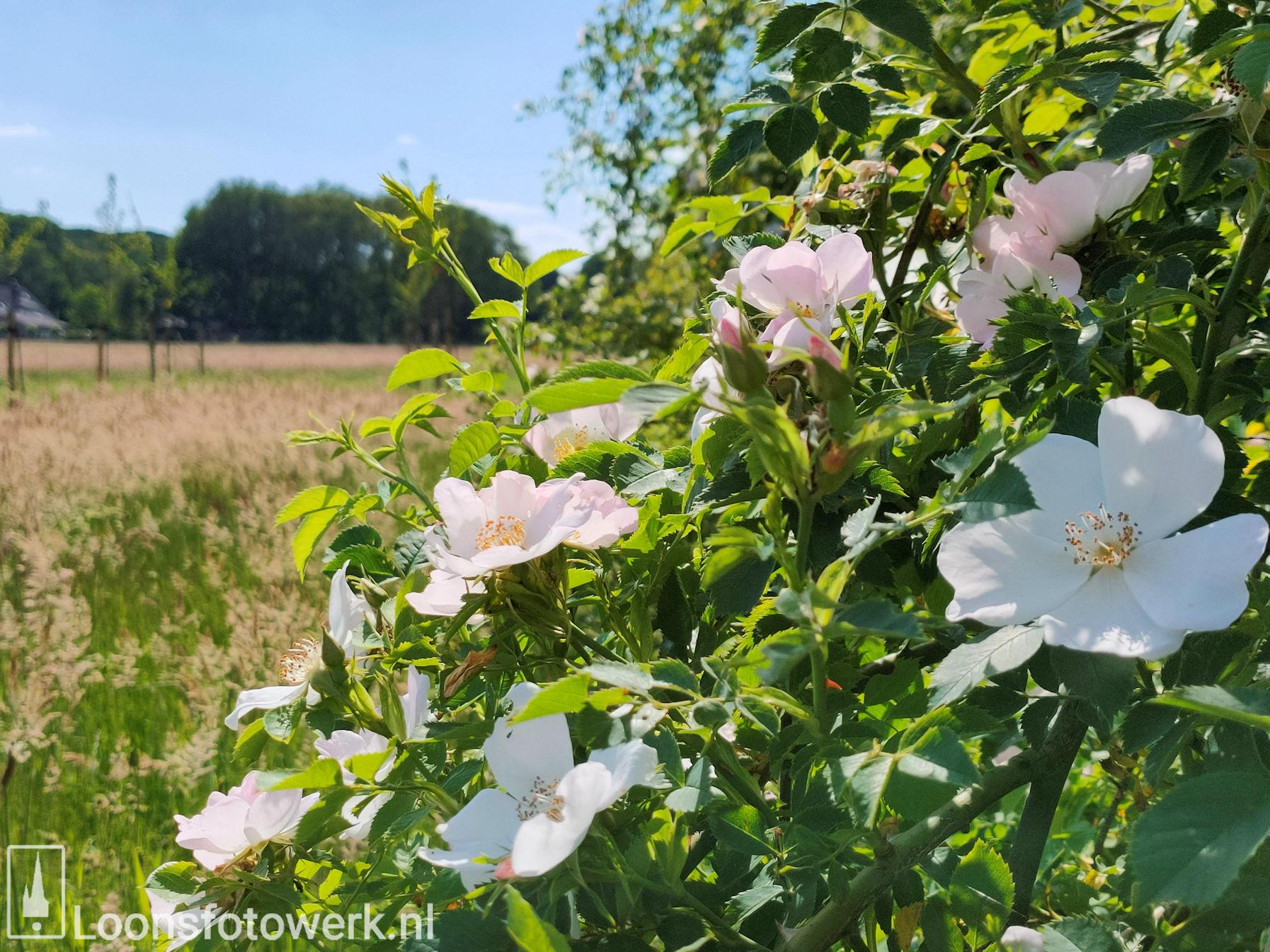 Bloemenweide Moleneind 14
