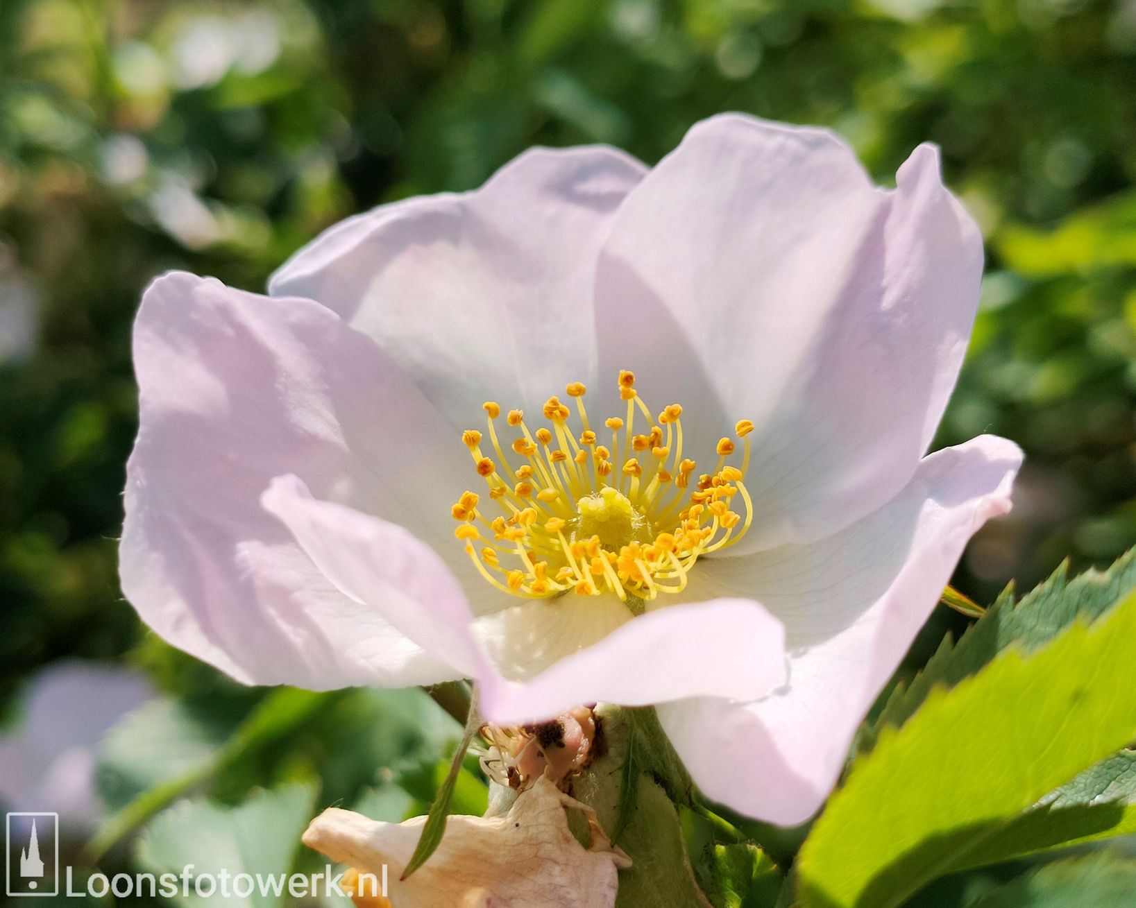 Bloemenweide Moleneind 15