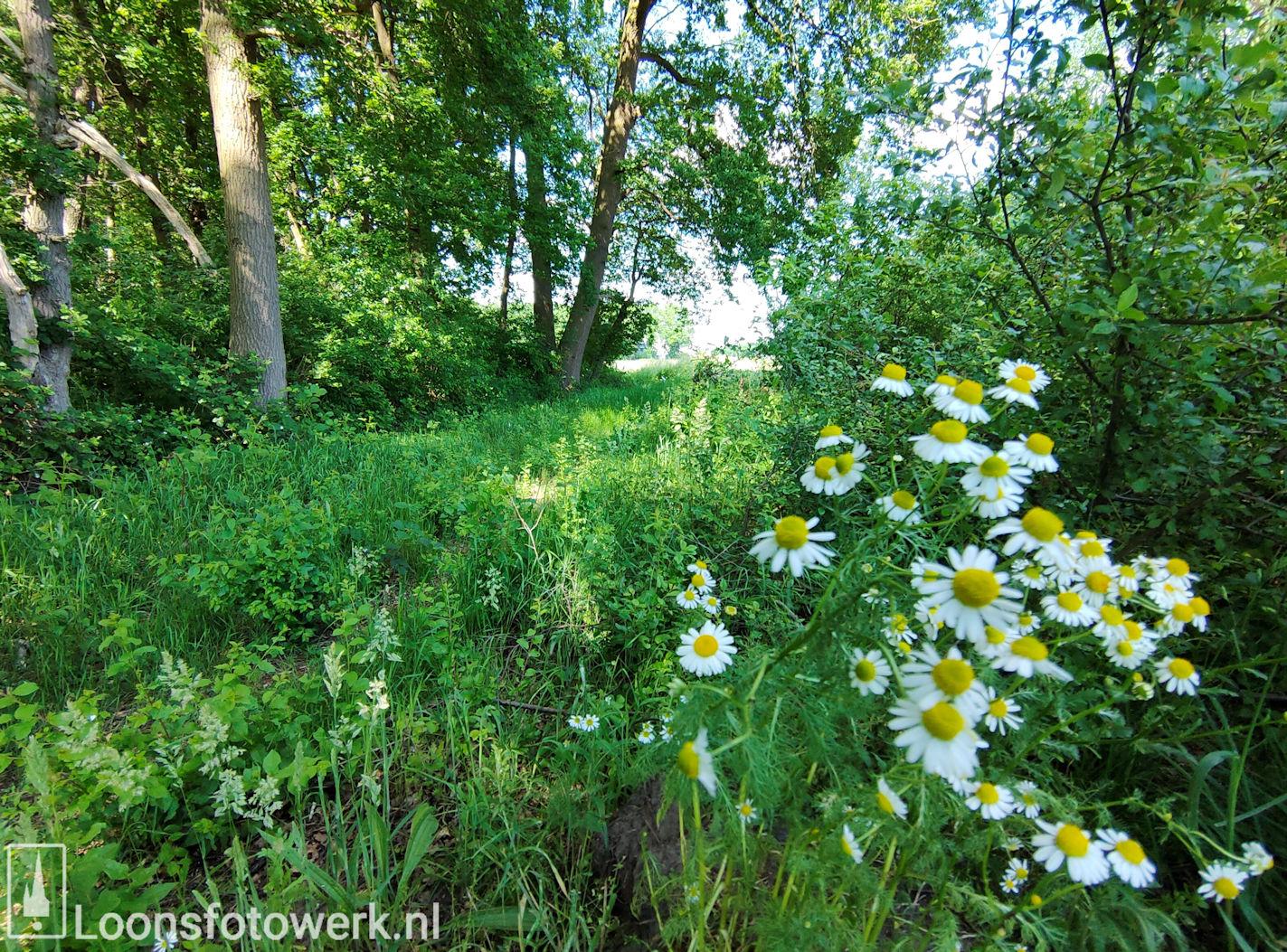 Bloemenweide Moleneind 19