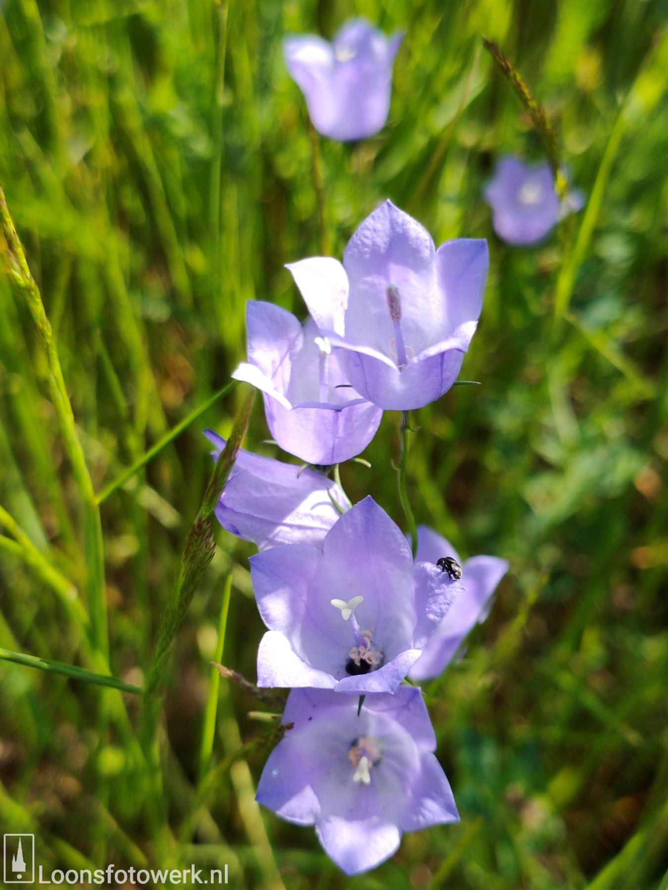 Bloemenweide Moleneind 33
