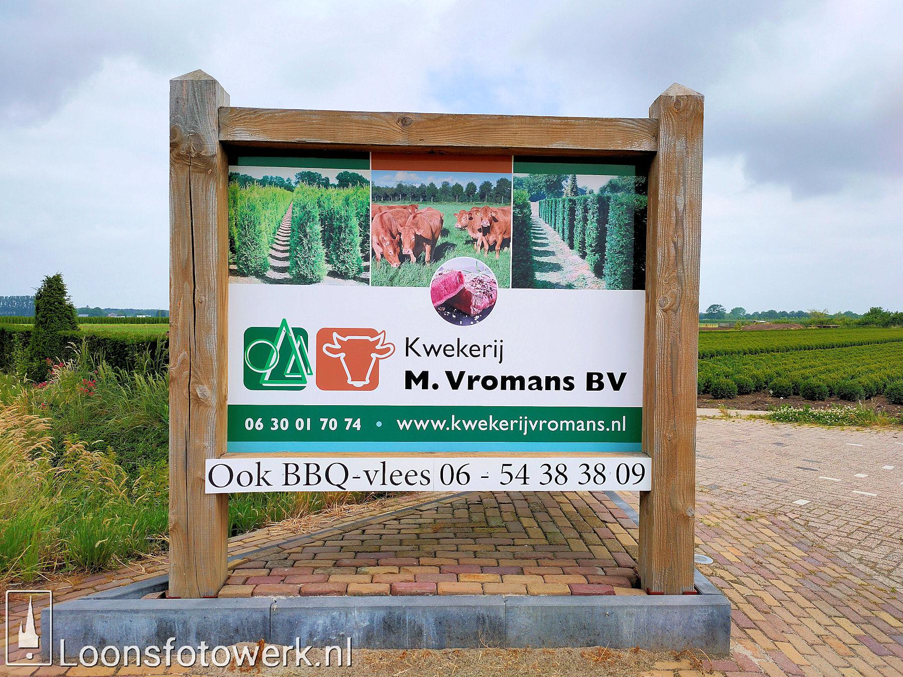 Vromans Limousin koeien Moleneind 12