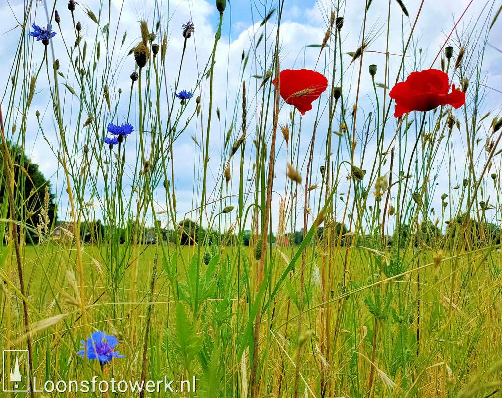 korenvelden Duiksehoef