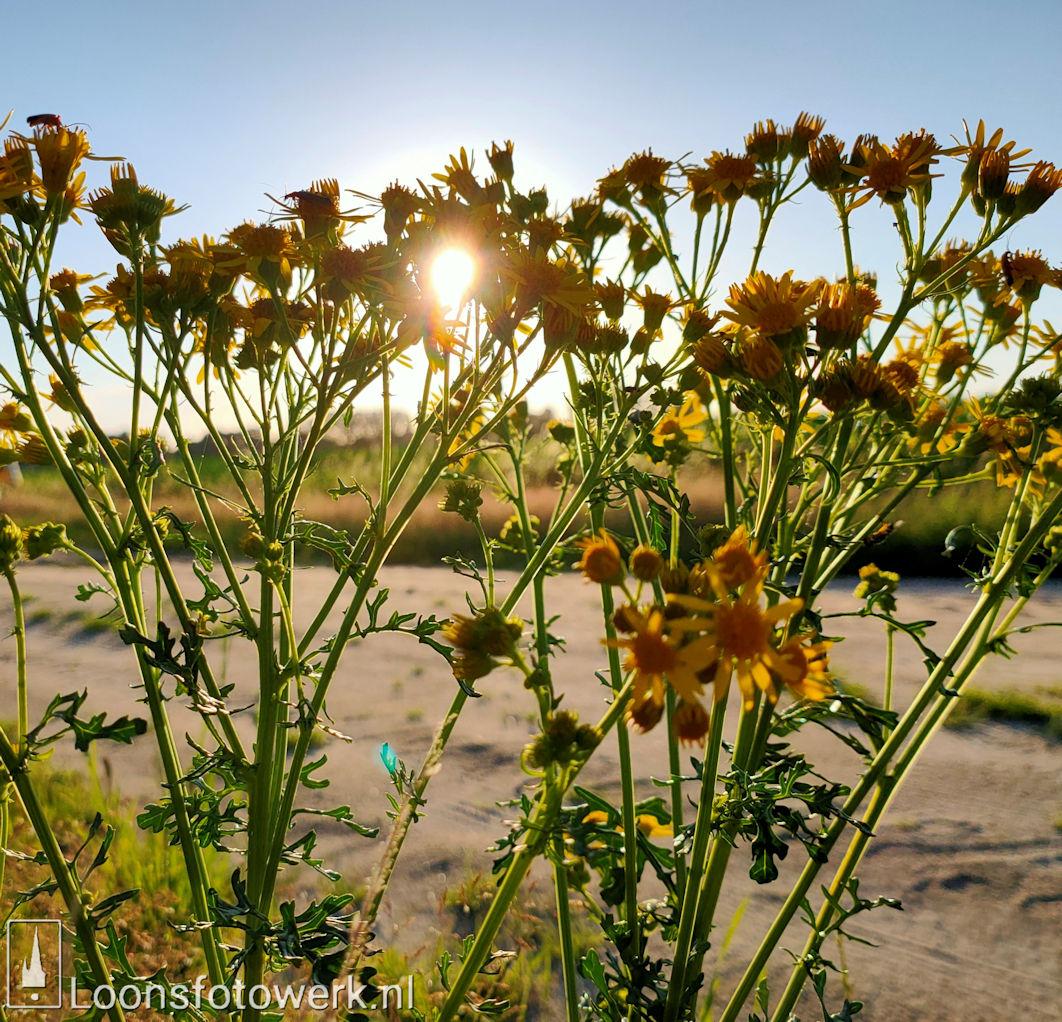 Lage zon buitengebied Loon op Zand 10
