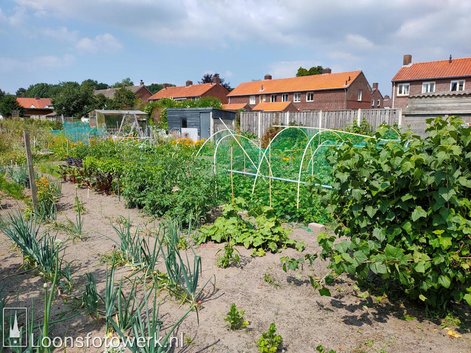 Verplaatsing tuinen Hooge Waai 6