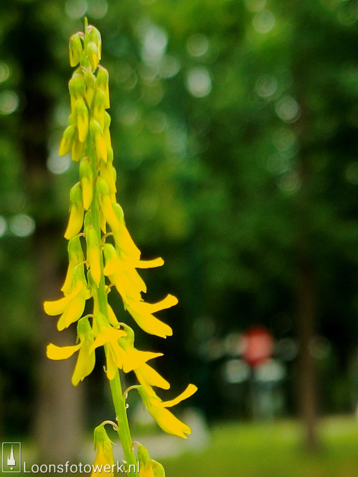 Vandaag is geel 5