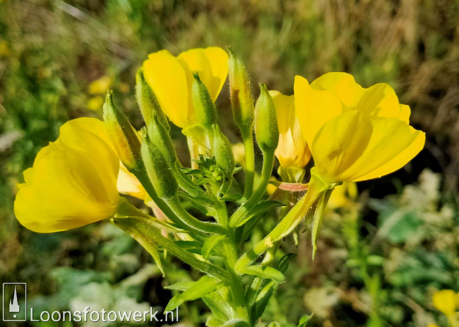 Vandaag is geel 7