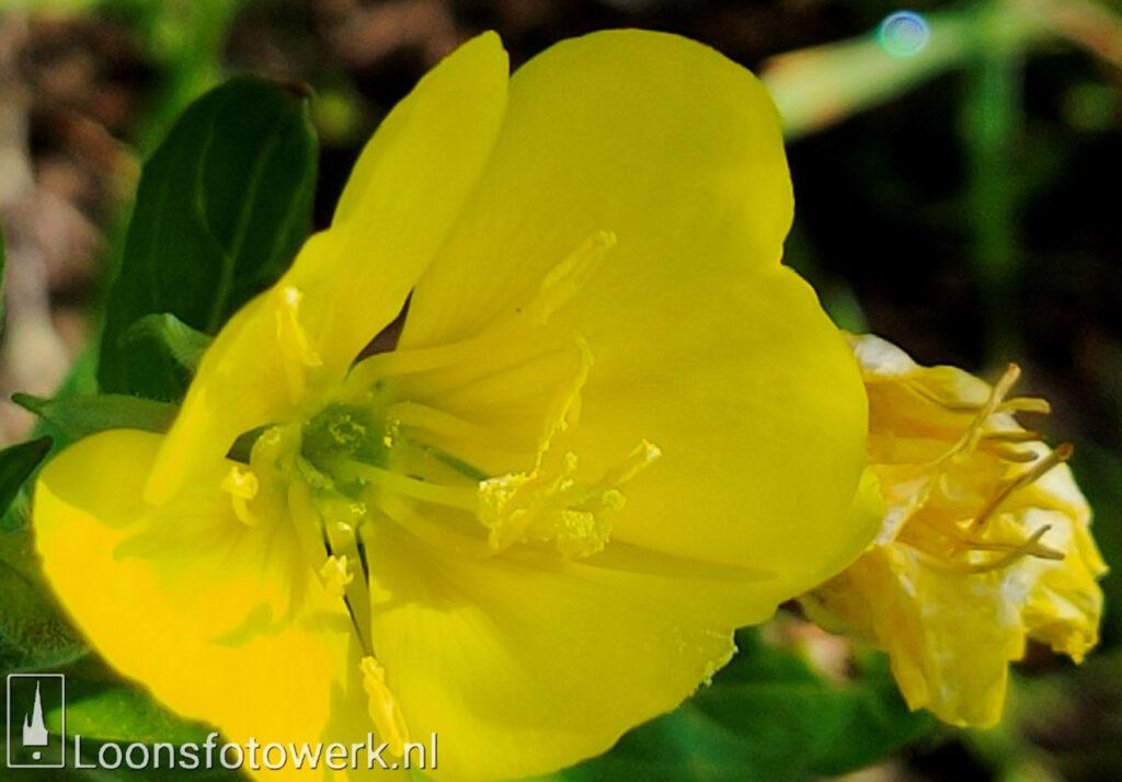 Vandaag is geel