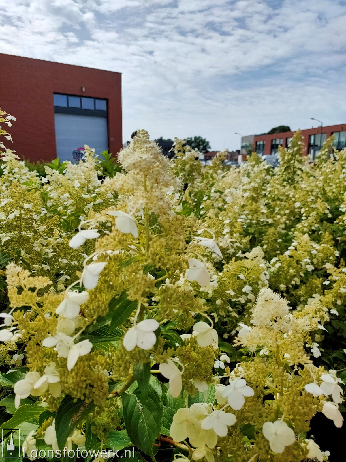 Bloemenpracht industrieterrein De Hoogt 1