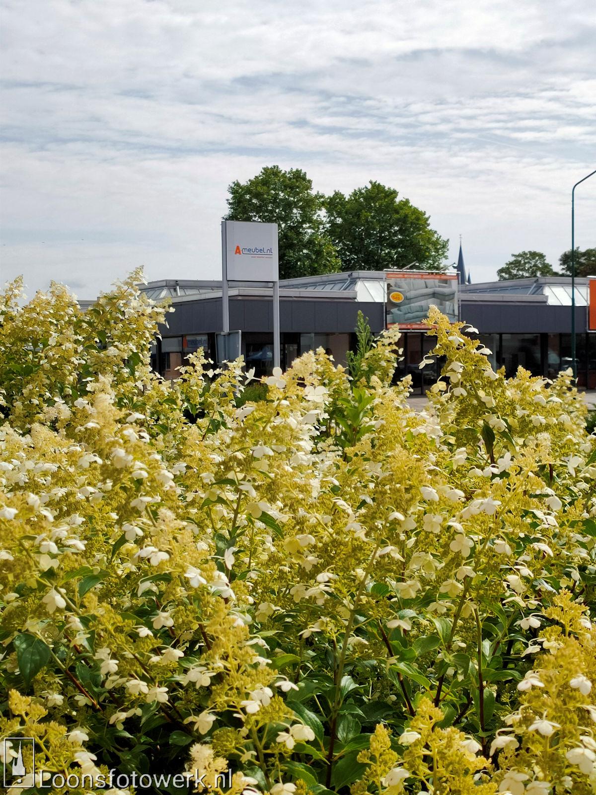 Bloemenpracht industrieterrein De Hoogt 2