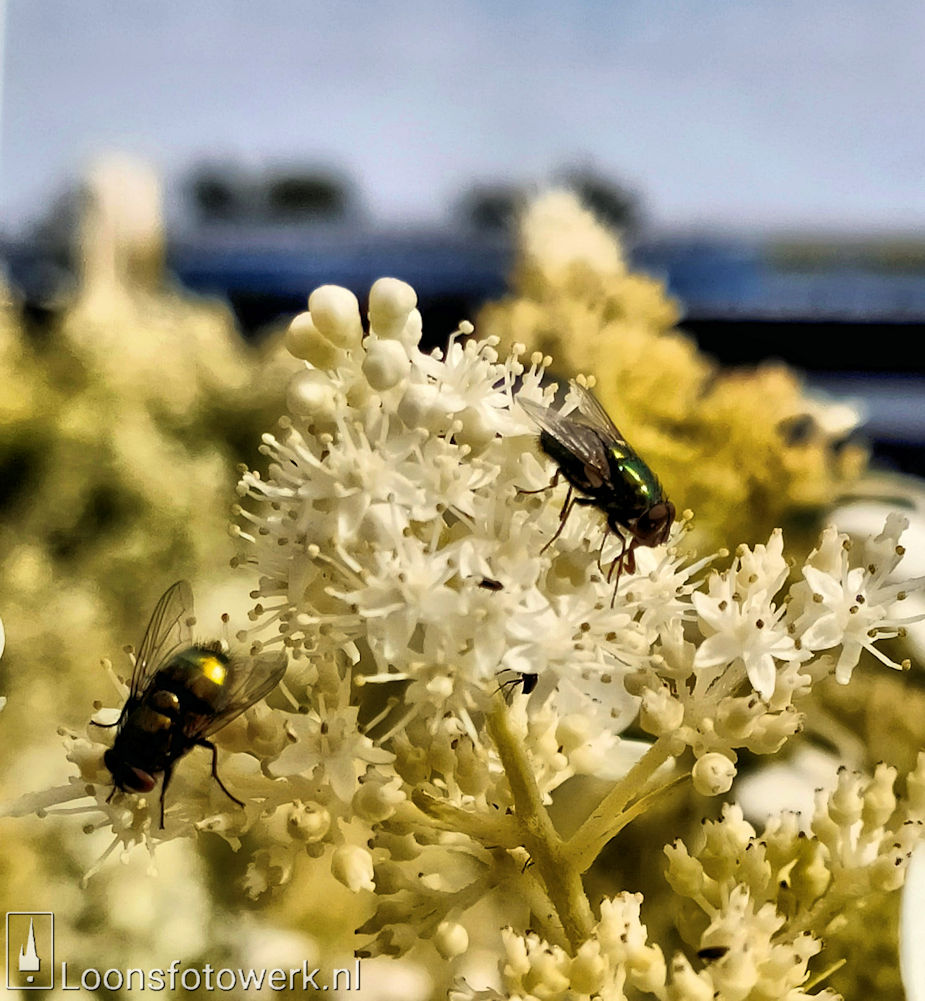 Bloemenpracht industrieterrein De Hoogt 6