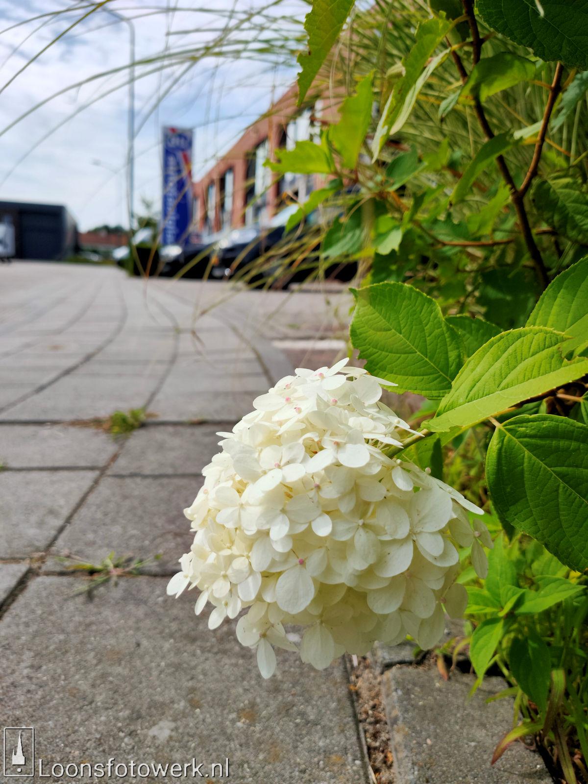 Bloemenpracht industrieterrein De Hoogt 7