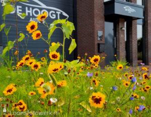 Bloemenpracht De Hoogt