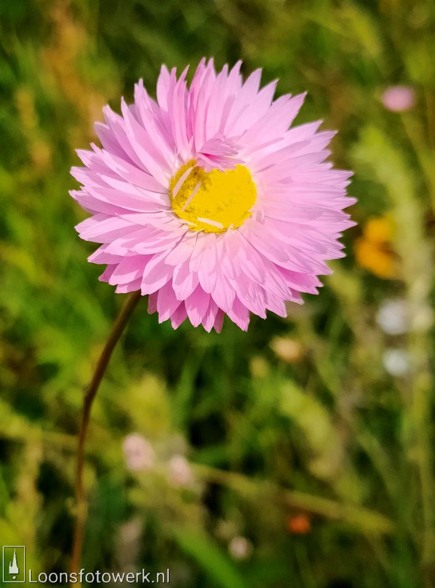 Bloemenpracht industrieterrein De Hoogt 9