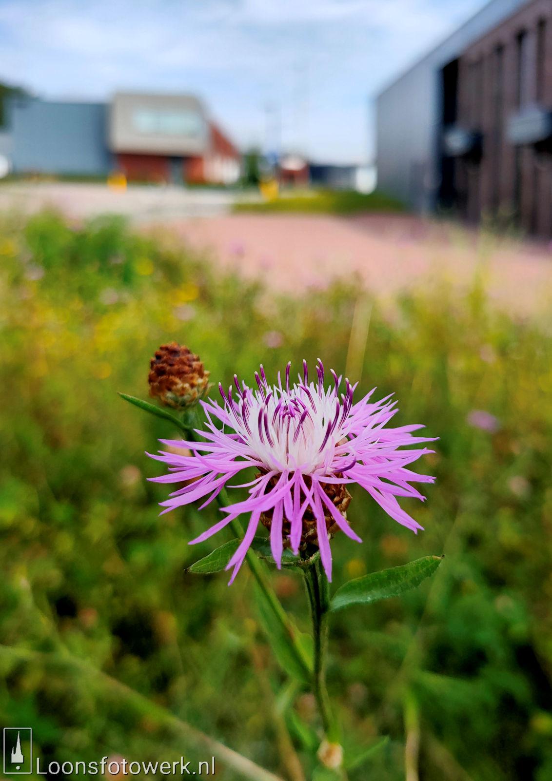 Bloemenpracht industrieterrein De Hoogt 12