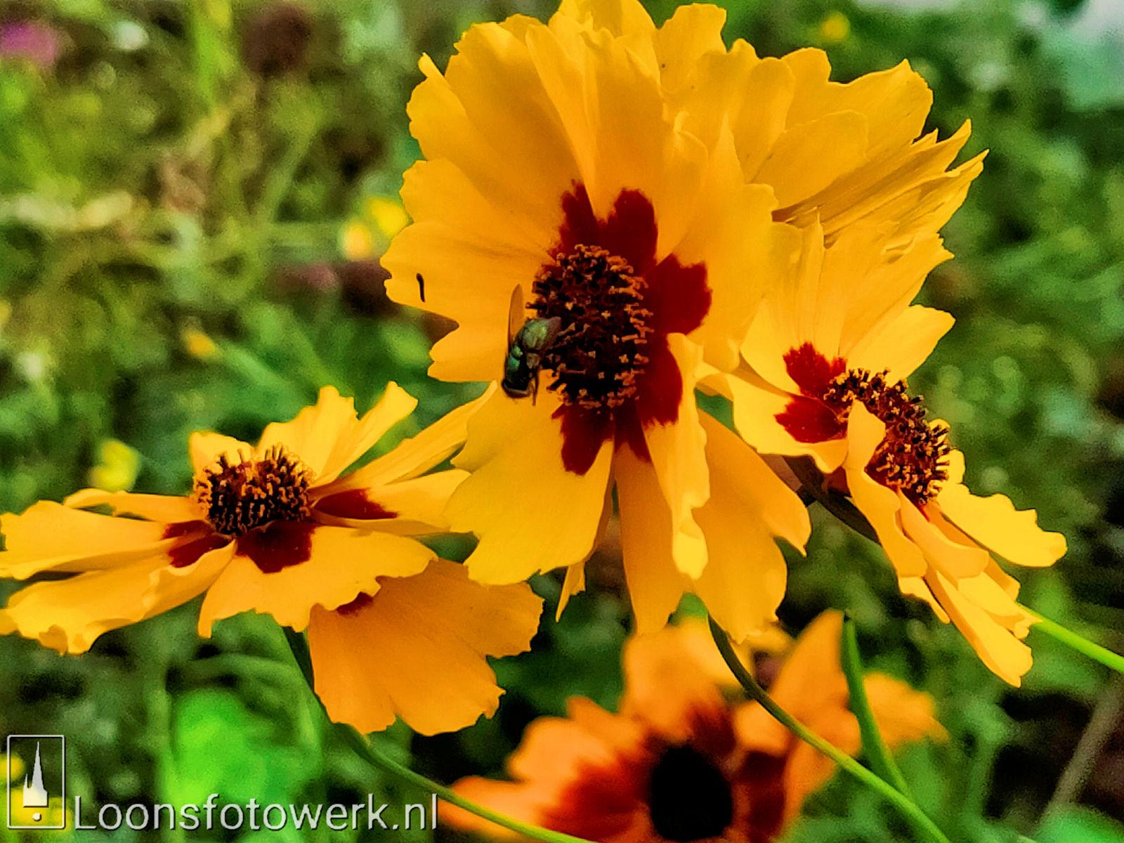 Bloemenpracht industrieterrein De Hoogt 13