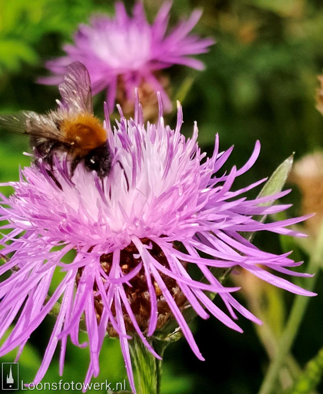 Bloemenpracht industrieterrein De Hoogt 15